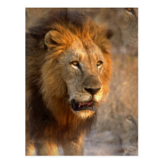 Rey de la postal de la selva