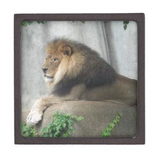 Rey de la selva caja de recuerdo de calidad