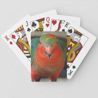 Rey de sexo masculino australiano Parrot - joven Cartas De Juego