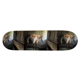 Rey del viento tabla de patinar