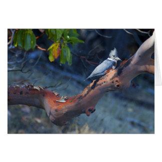 Rey Fisher se encaramó en el árbol del Madrona, Tarjeta De Felicitación
