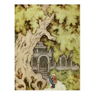 Rey Looks para arriba en árbol gigante Tarjeta Postal