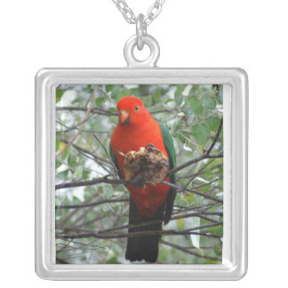 Rey magnífico Parrot Collar Plateado