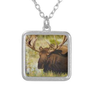 Rey Moose Bull de Teton Colgante Cuadrado