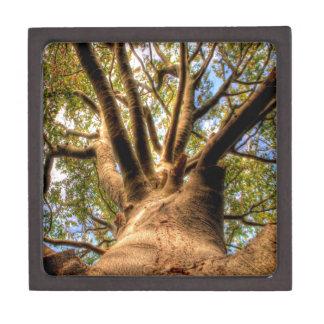 Rey Of Beech del árbol Cajas De Regalo De Calidad