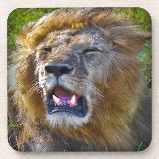 Rey Of The Jungle del león Posavasos