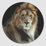 Rey orgulloso del reino animal etiqueta redonda