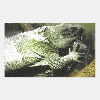 Rey Photography del lagarto Rectangular Pegatinas