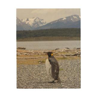 Rey pingüino, Isla Martillo, Tierra del Fuego Cuadros De Madera