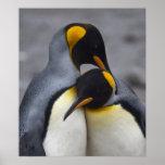 Rey pingüinos en la impresión del amor