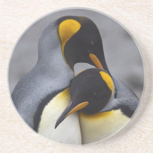 Rey pingüinos en práctico de costa del amor posavasos de arenisca