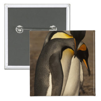 Rey pingüinos (patagonica del Aptenodytes P.) Pin
