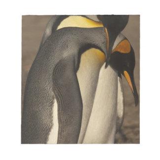 Rey pingüinos (patagonica del Aptenodytes P.) Bloc