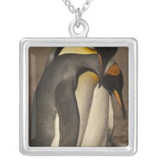 Rey pingüinos (patagonica del Aptenodytes P.) Colgantes Personalizados