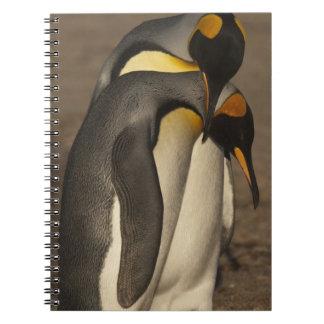 Rey pingüinos (patagonica del Aptenodytes P.) Libro De Apuntes