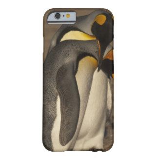 Rey pingüinos (patagonica del Aptenodytes P.) Funda De iPhone 6 Barely There
