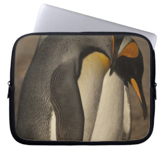 Rey pingüinos (patagonica del Aptenodytes P.) Manga Portátil