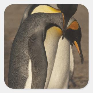 Rey pingüinos (patagonica del Aptenodytes P.) Colcomanias Cuadradases