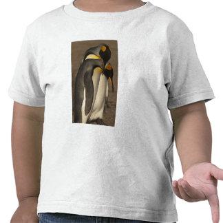Rey pingüinos (patagonica del Aptenodytes P.) Camiseta