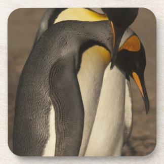 Rey pingüinos (patagonica del Aptenodytes P.) Posavasos De Bebidas