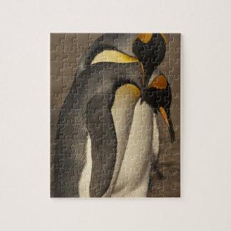 Rey pingüinos (patagonica del Aptenodytes P.) Rompecabezas