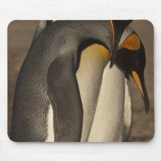Rey pingüinos (patagonica del Aptenodytes P.) Alfombrillas De Raton