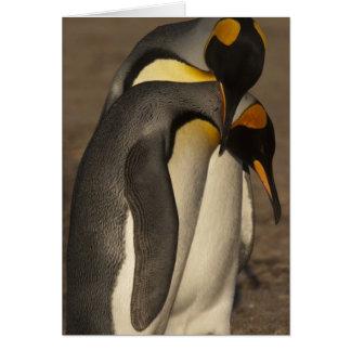 Rey pingüinos (patagonica del Aptenodytes P.) Felicitacion