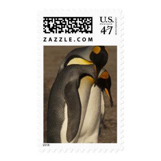 Rey pingüinos (patagonica del Aptenodytes P.) Timbre Postal
