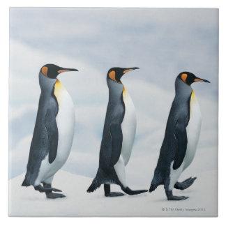 Rey pingüinos que caminan en solo fichero azulejo cuadrado grande