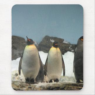 Rey pingüinos alfombrilla de ratón