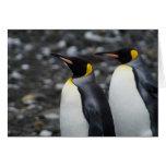 Rey pingüinos tarjetón