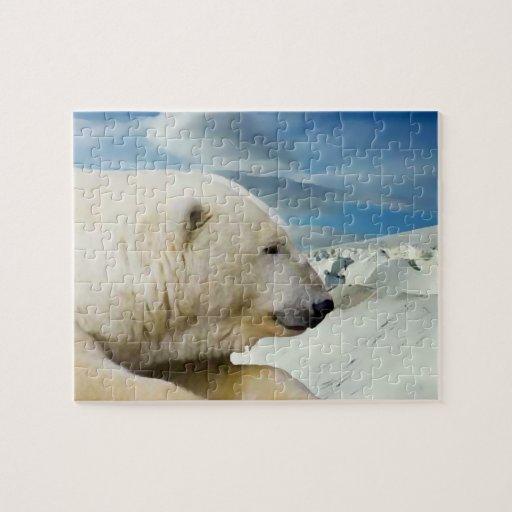 Rey polar Puzzle