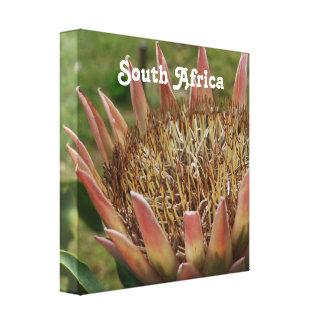 Rey Protea surafricano