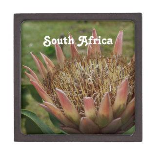Rey Protea surafricano Caja De Recuerdo De Calidad