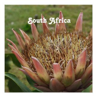 Rey Protea surafricano Invitación Personalizada