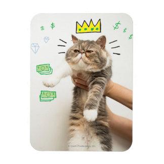 Rey rico Cat Iman Flexible