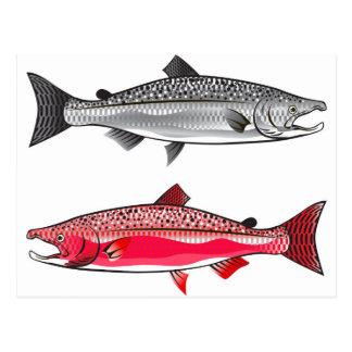 Rey salmón. Plata y freza Tarjetas Postales