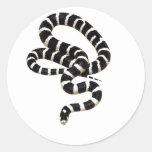 Rey serpiente de Junglewalk.com Pegatina Redonda