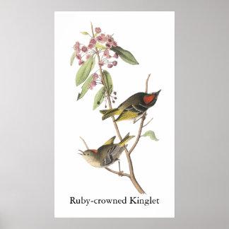 reyezuelo Rubí-coronado Juan Audubon Impresiones