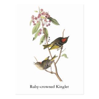 reyezuelo Rubí-coronado, Juan Audubon Tarjeta Postal