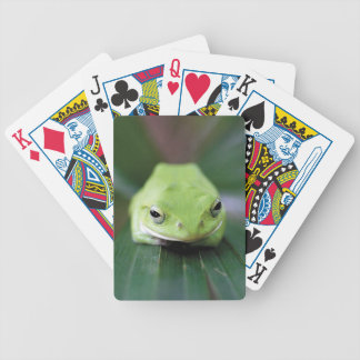 Rhacophorus schlegelii (shiyuregeruaogaeru) bicycle playing cards