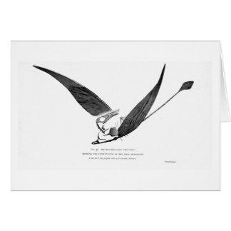 Rhamphorhynchus phyllurus art card