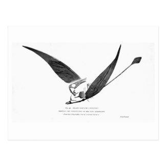 Rhamphorhynchus phyllurus art postcard