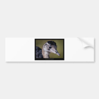 Rhea americana - Greater Rhea 01 Car Bumper Sticker