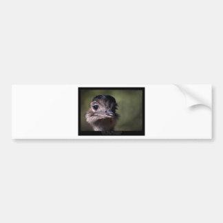 Rhea americana - Greater Rhea 02 Car Bumper Sticker