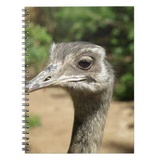 rhea-bird-32758 notebook