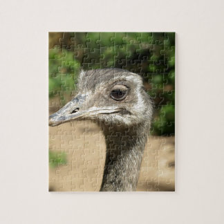 rhea-bird-32758