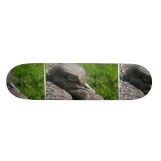 Rhea Skate Board Decks