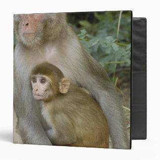 Rhesus Macaques Macaca mulatta) mother & baby 3 Ring Binders