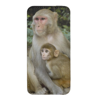 Rhesus Macaques Macaca mulatta) mother & baby iPhone 5 Pouch
